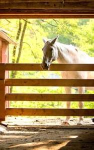 horse_photo